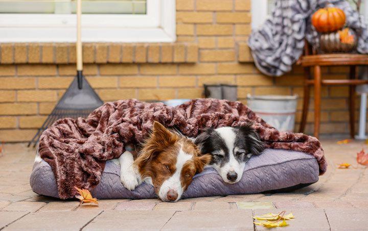 Bailey & Bella Faux Fur Blanket