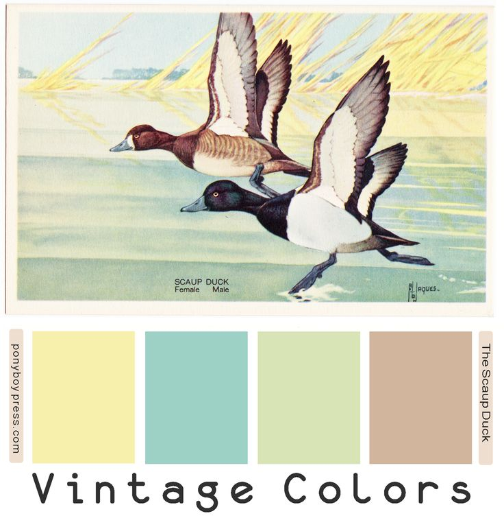 The Scaup Ducks pastel color palette from vintage postcard - ponyboypress.com. Hex codes on the blog.