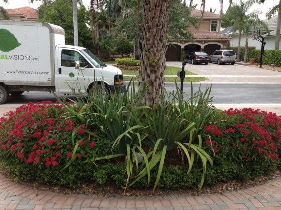 florida garden ideas minus the palm tree