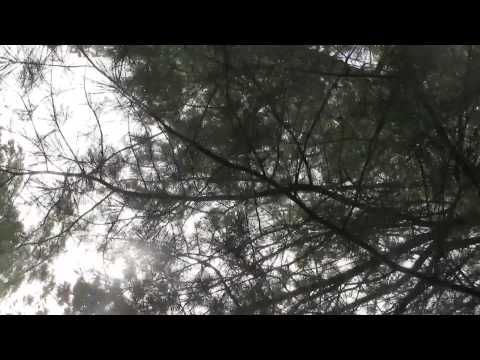 [VIDEO] New trailer for The Bear by Claire Cameron, posted by Hachette Book Group February 11, 2014.