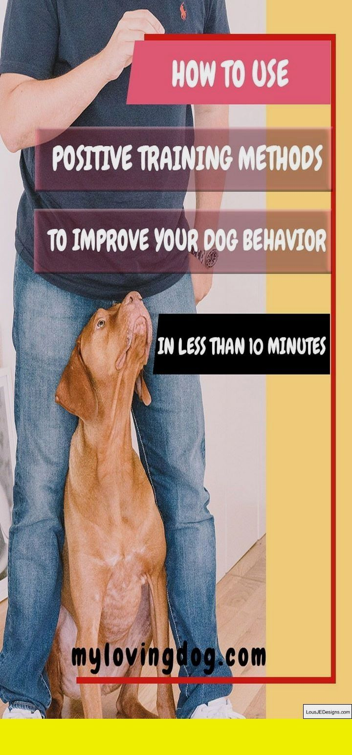 Potty Training Puppy In High Rise And Pics Of Dog Training Books