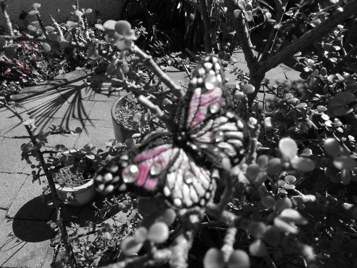 Pink butterfly in the black and white garden