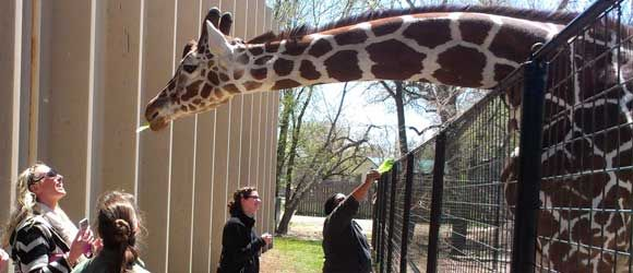 Giraffe encounters lee richardson zoo garden city ks Garden city zoo
