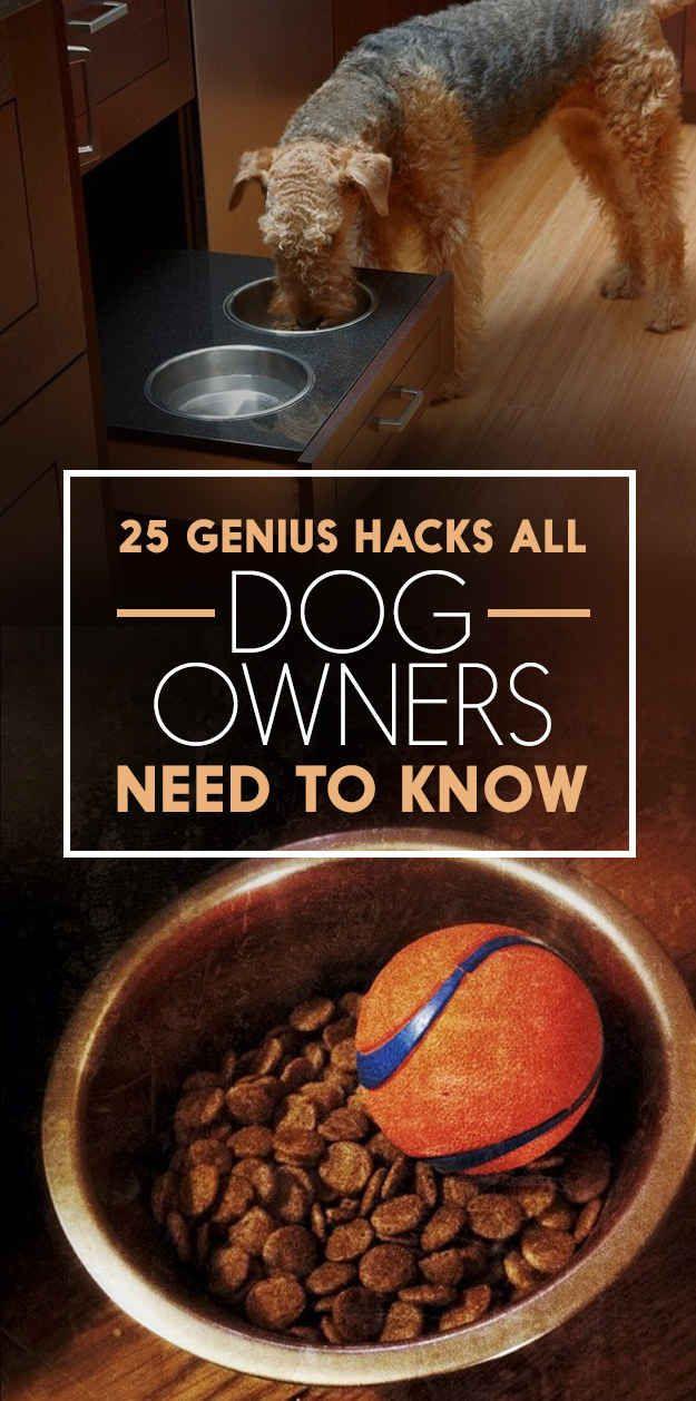 25 Genius Hacks That Make Having A Dog So Much Easier