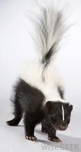 Skunk Removal and also Skunk Manage All around Your Home   london ontario pest control