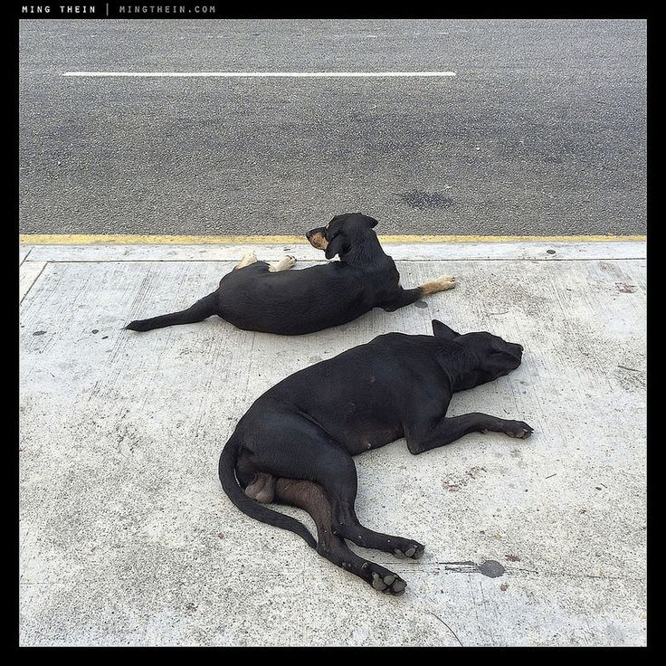 Sleeping dogs and all that.  Image by Ming Thein.