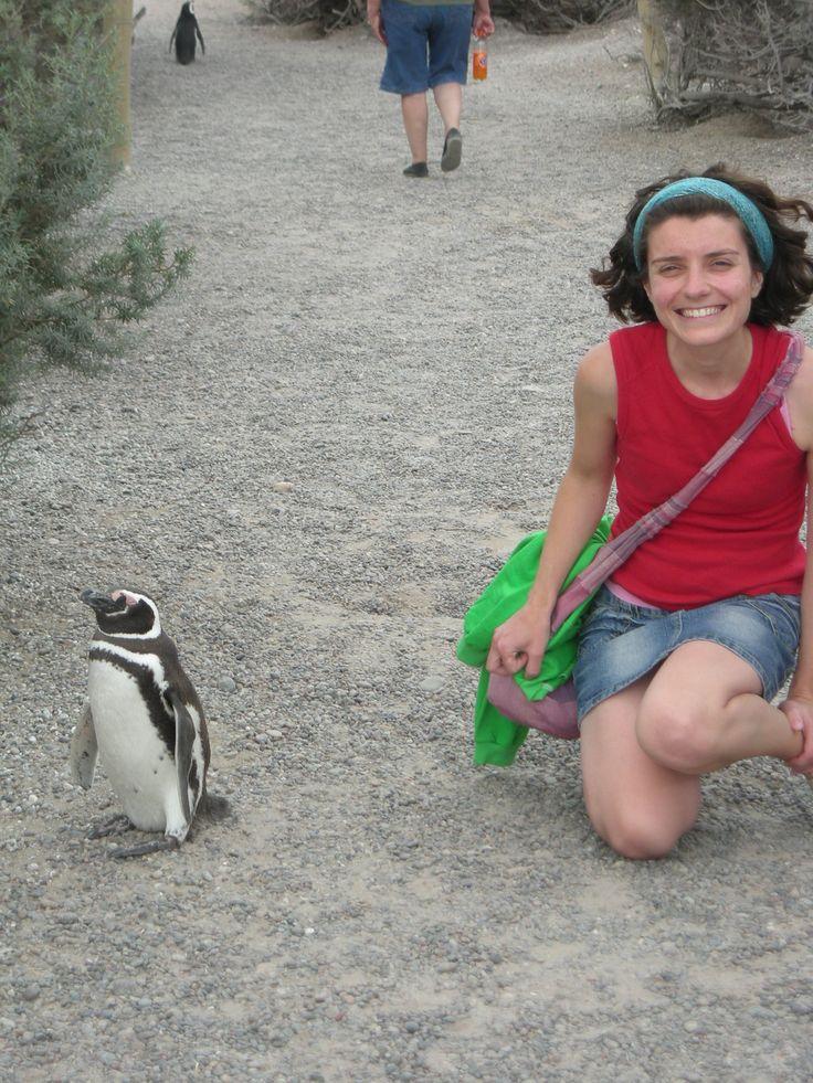 I #Pinguini muoiono sul serio e non sono cartoni animati