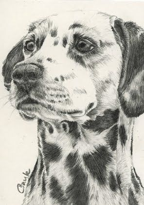 images of drawings of dalmatians | FUR IN THE PAINT: Dalmatian Dog in graphite