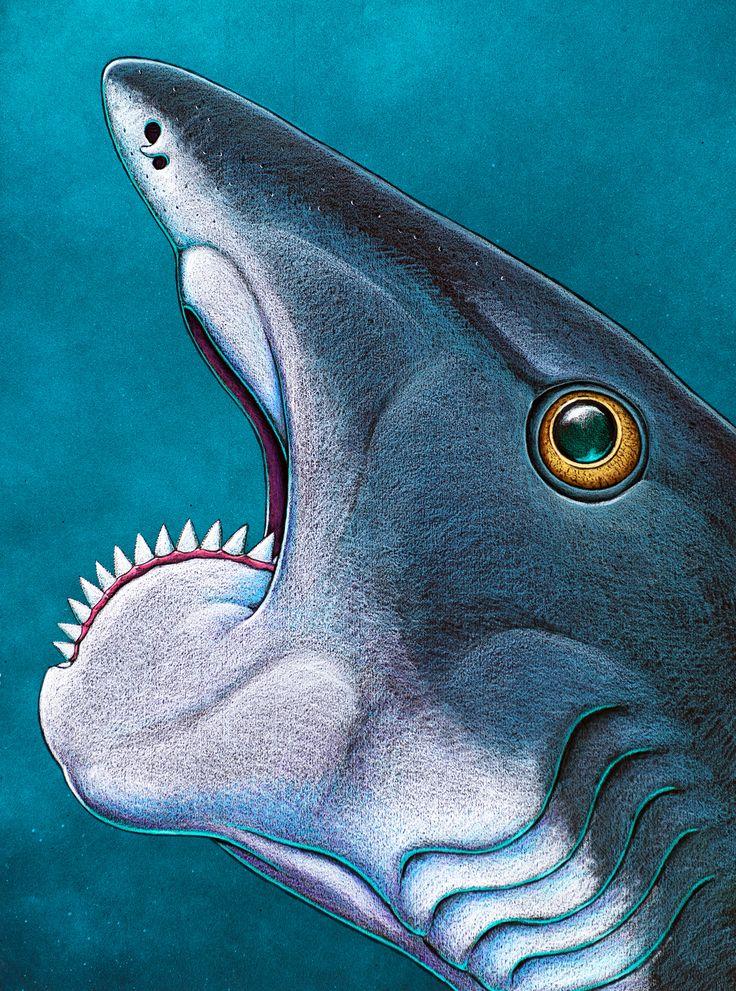 Chubby shark ancient teeth