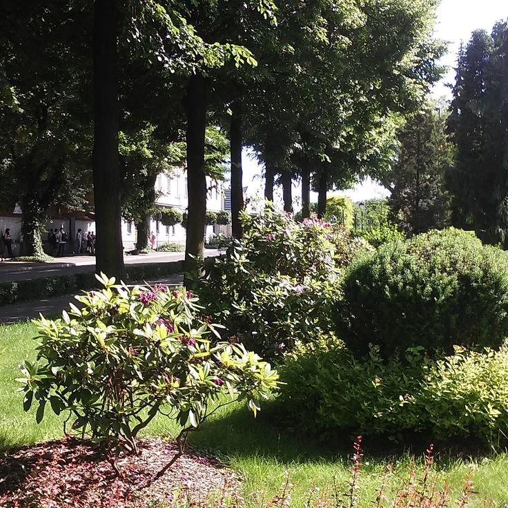 Park in Oswiecim  Poland