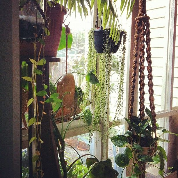 Hanging plants in front of window in den dream home - How to hang plants in front of windows ...