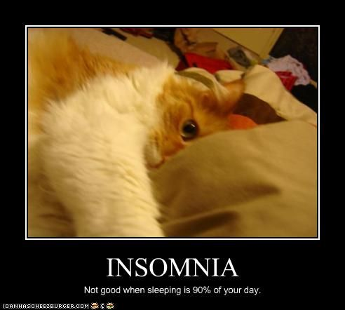 Insomnia Funny Images | funny pictures cat has insomnia ...