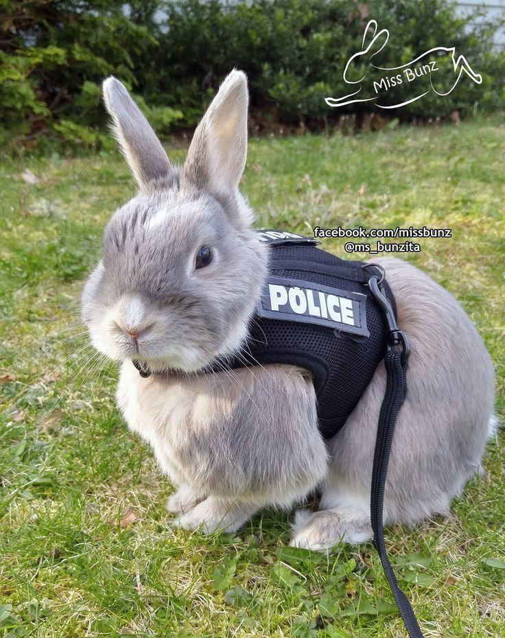 This adorable police bunny is like a reallife Judy Hopps