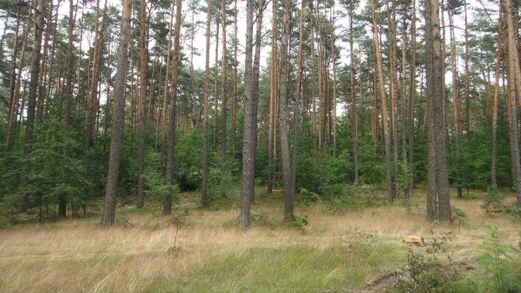 Las w Nieznanowicach