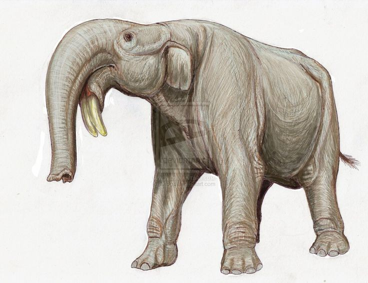 The Deinotherium, an extinct member of the elephant family. Its downward facing tusks are about as weird as nature gets.