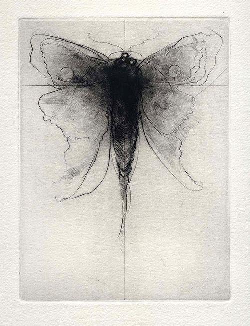 yama-bato:  Imaginary Moth: Drypoint by Amy Georgia Buchholz via
