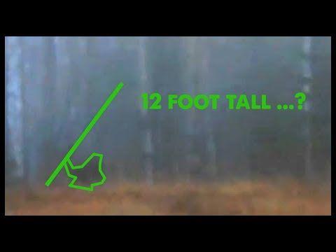 Videoanalyse: Ein baumwerfender Bigfoot?