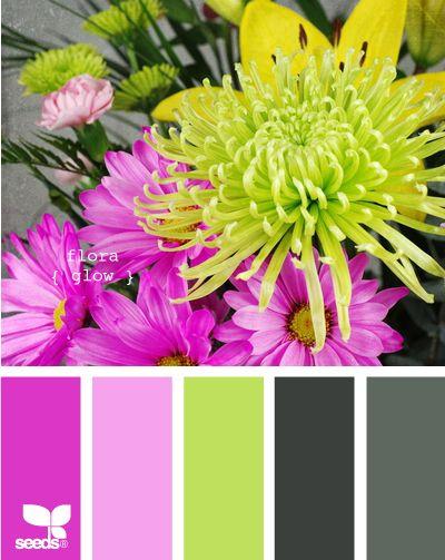 OMG color palettes