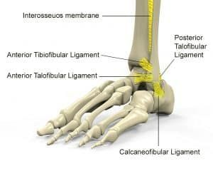 Picture showing the lateral ligaments of the ankle: Anterior Talofibular Ligament, Calcaneofibular Ligament, Posterior Talofibular ligament, Anterior Tibiofibular Ligament, Interosseus Membrane