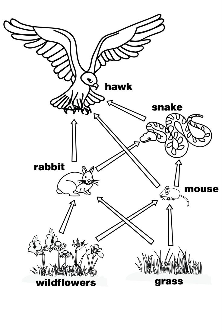25  best ideas about food webs on pinterest