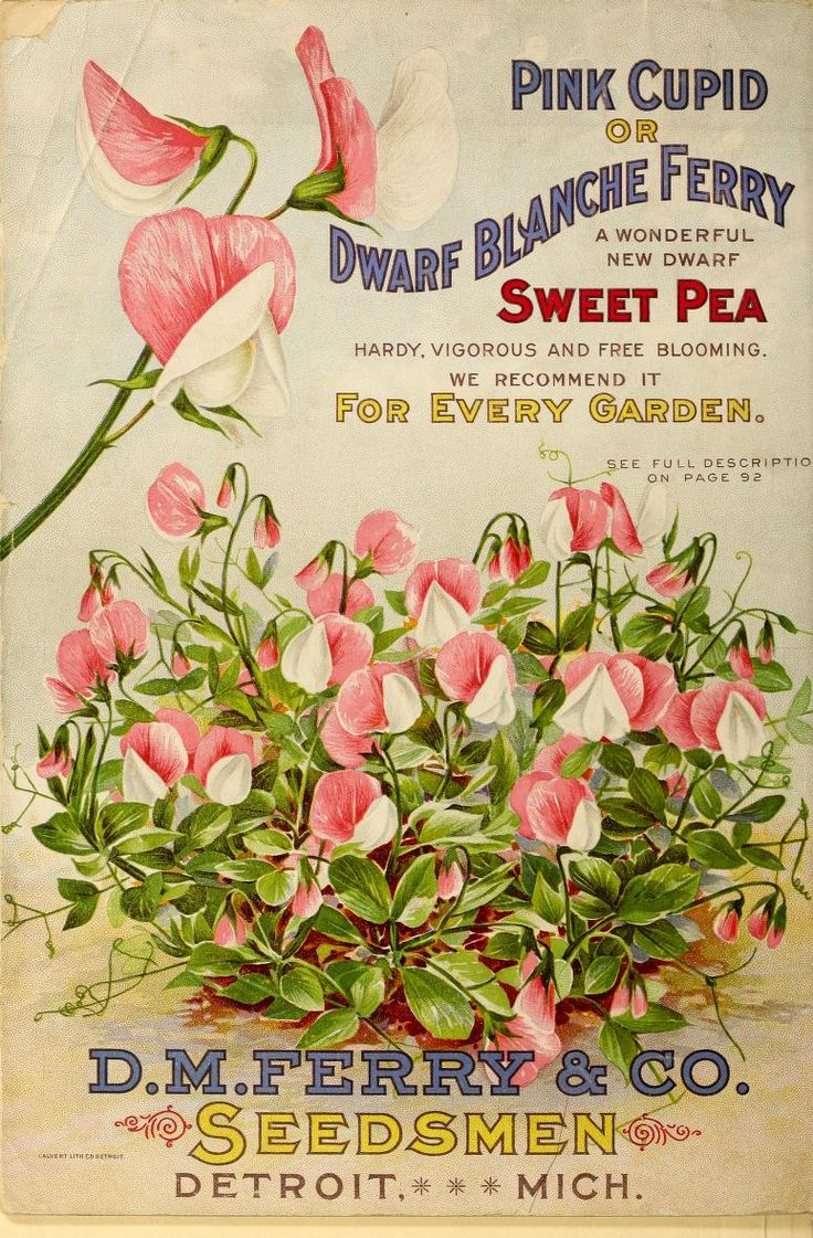 1899 - Seed annual, 1899. - Biodiversity Heritage Library..Beautiful Illustrations in this antique seed catalog!!