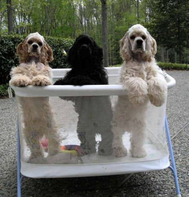 ~how cute is this....hope they don't spend time in there tho :( ..