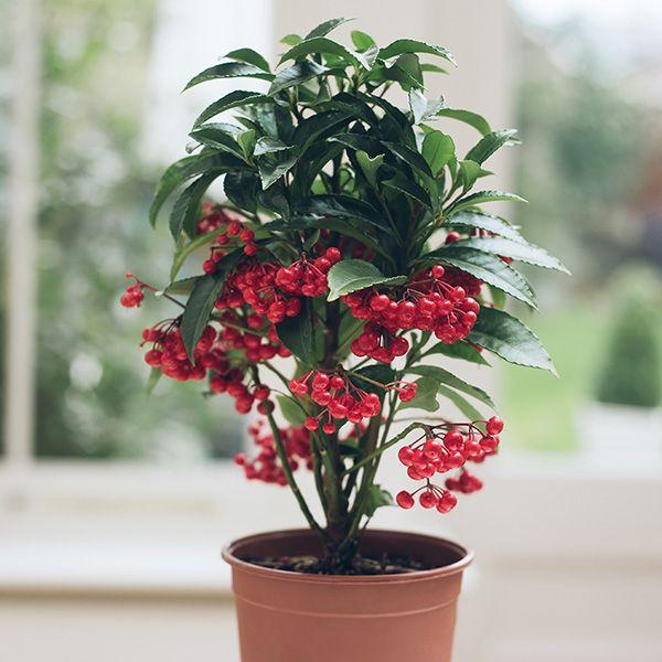 77 best plantes non toxiques pour les chats images on. Black Bedroom Furniture Sets. Home Design Ideas