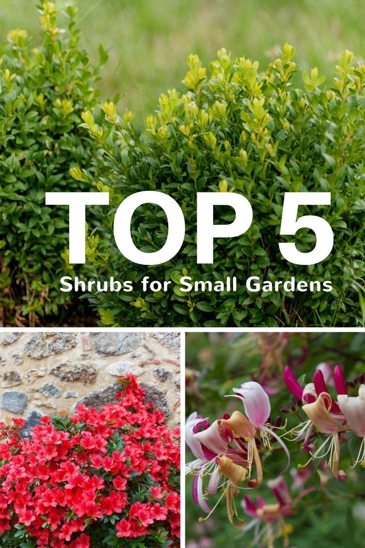 Top 5 Shrubs for Small Gardens - Gardening Know How's Blog