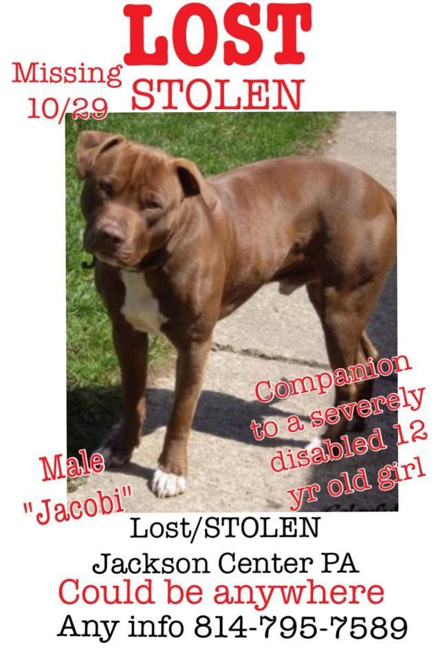 STOLEN DOG IN JACKSON CENTER PA... https://www.facebook.com/pages ...