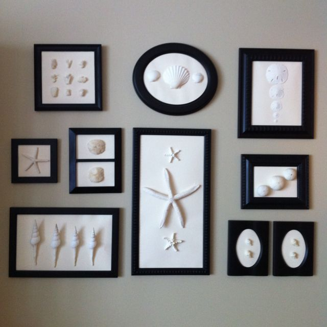Mounted shells & sea life; all painted same color & framed in same color frame.  Modern & not typical sea shell display.