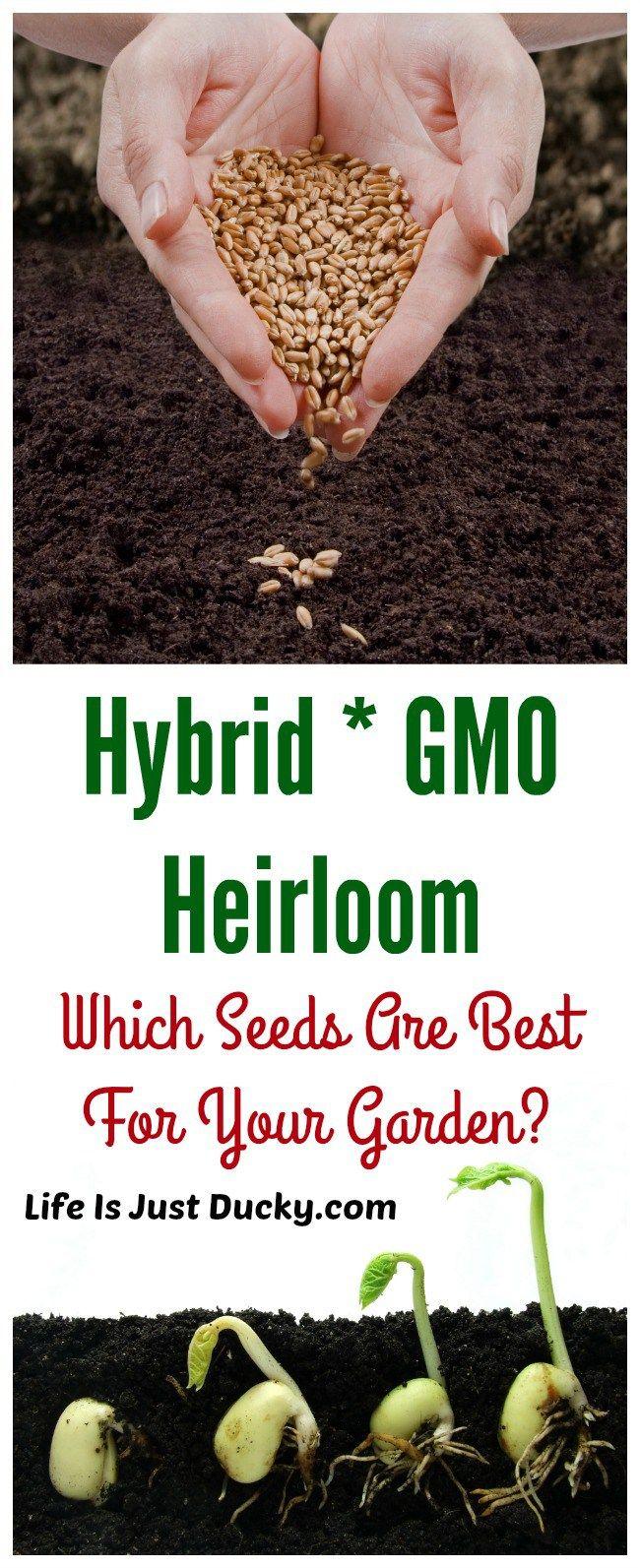 634 best grow bigger plants gardening u0026 planting the easy way