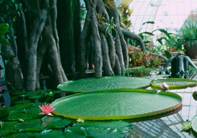 Enter a jungle at the San Francisco Conservatory of Flowers. Admission is now free to members of the UC Botanical Garden.
