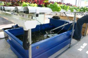 Where to Buy Aquaponics Supplies