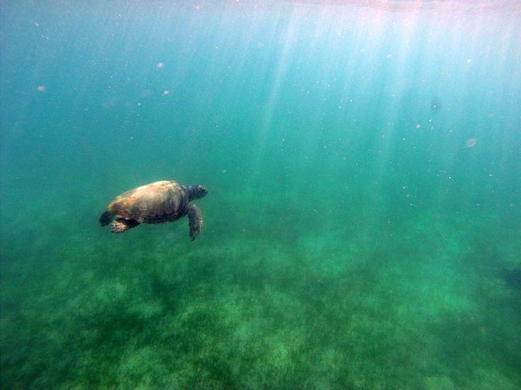 Underwater beauty of Zakynthos Visit our site http://seakayakingzakynthos.com/