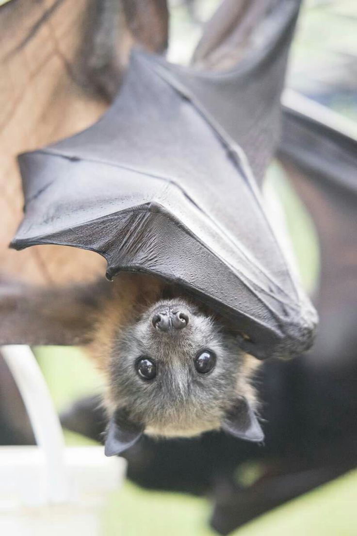 ценятся милые картинки с летучими мышами том, насколько