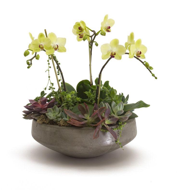 Mini Orchid & Succulent arrangement