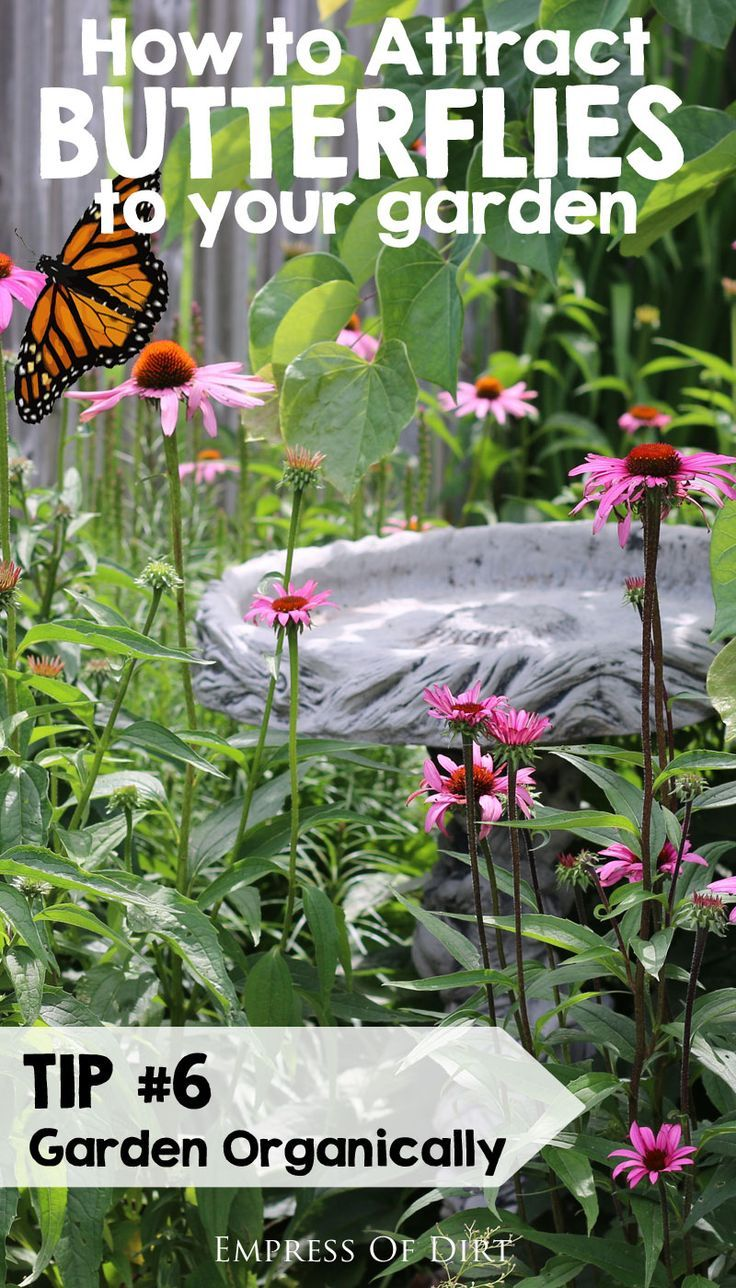 Tip #56: Garden organically. See more tips for attracting butterflies to your garden.....#spon