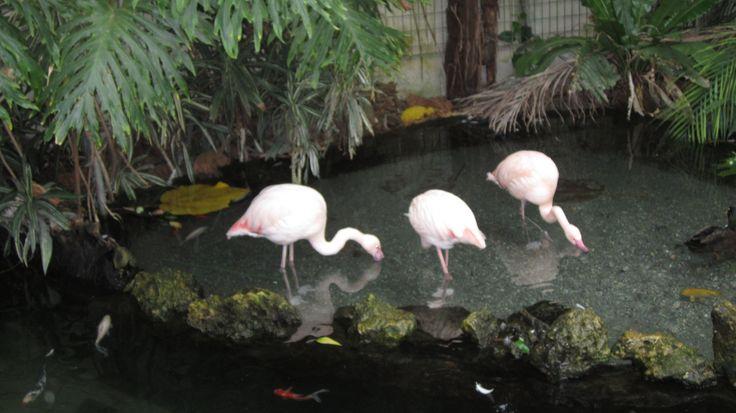 Flamingoja Nizzan luonnontieteellisessä museossa