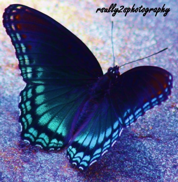 Carole's blue butterfly is stunning!  We have been in some of the same Etsy teams for several years.