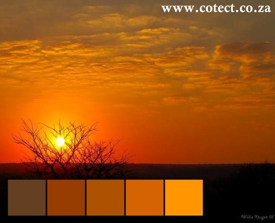 There is nothing like a winter bushveld sunset when it comes to #colour inspiration