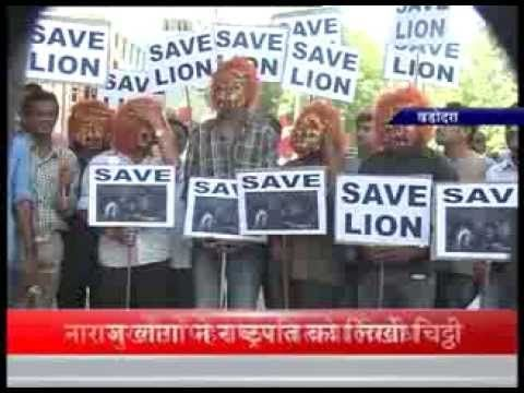 Save lion campaign in Baroda, Gujarat to protest of Gir lions to roar in Madhya Pradesh