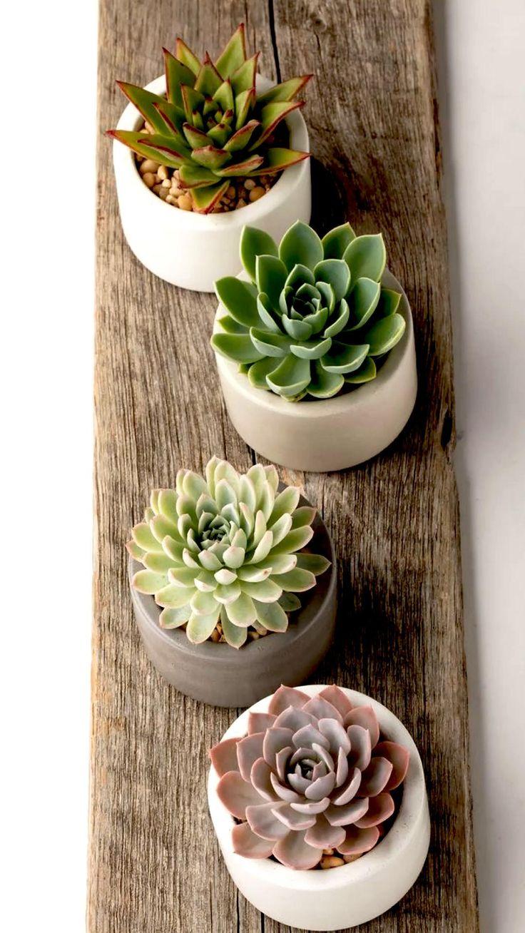 Succulent Arrangements, Cacti And Succulents, Planting Succulents, Planting Flowers, Cactus Plants, Cactus Art, Succulent Gardening, Garden Plants, House Plants