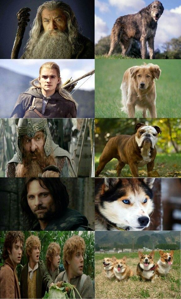 LOTR characters and their Canine counterparts. THIS IS SO CUTE
