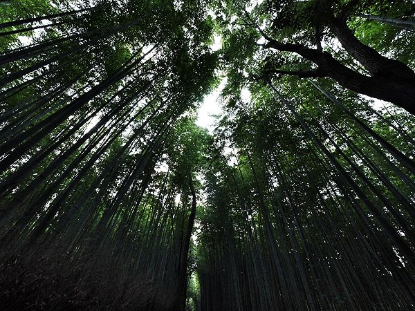 Arashiyama KyotoArashiyama Itinerary, Favorite Places, Gorgeous Places, Inspiration Places, Shorts Lists, Arashiyama Kyoto On