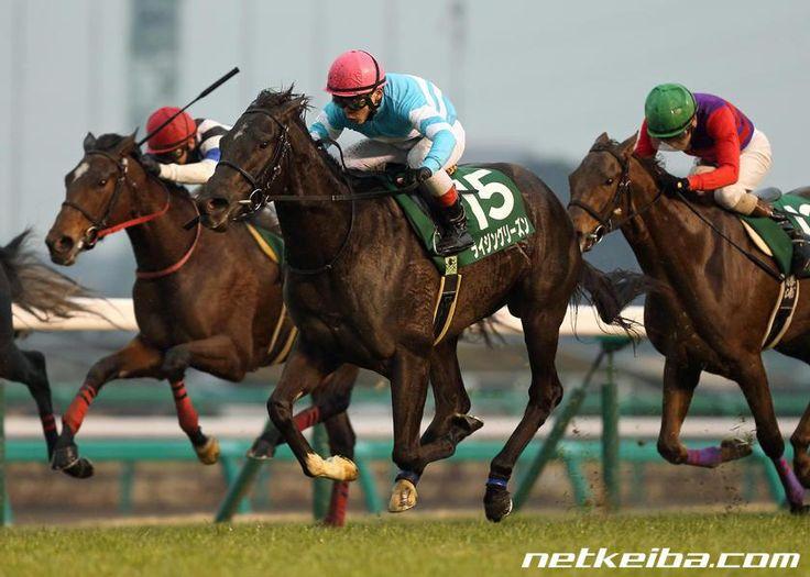 ライジングリーズン  みんなの投稿写真 競走馬データ - netkeiba.com