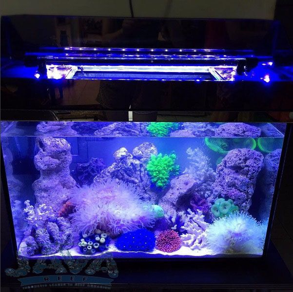 perawatan aquarium air laut