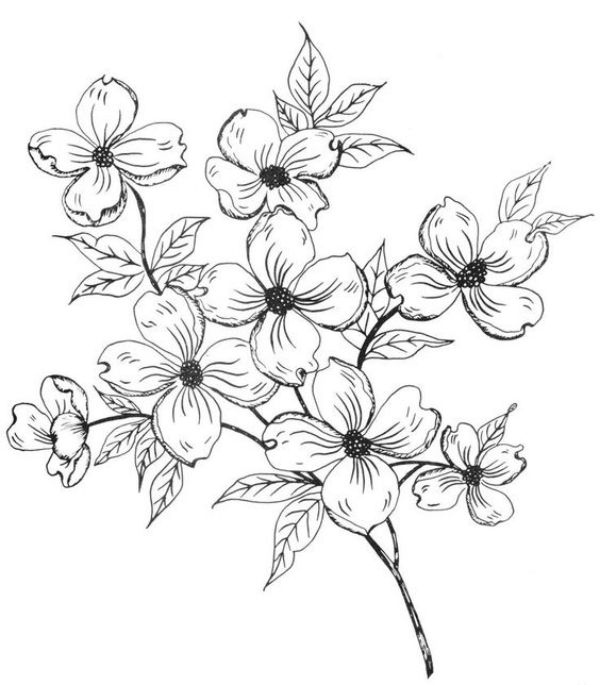 42 Simple And Easy Flower Drawings For Beginners Easy Flower