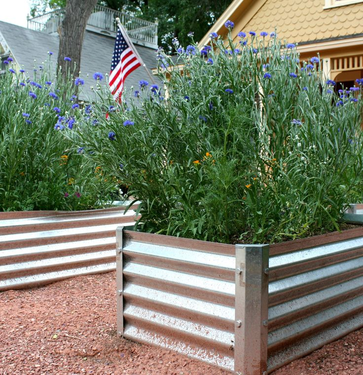 Kitchen Garden Box With Wire Top: 17 Best Images About Metal Garden Beds On Pinterest