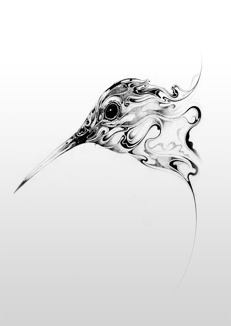 Hummingbird Drawings Step By Step: Animals On Behance