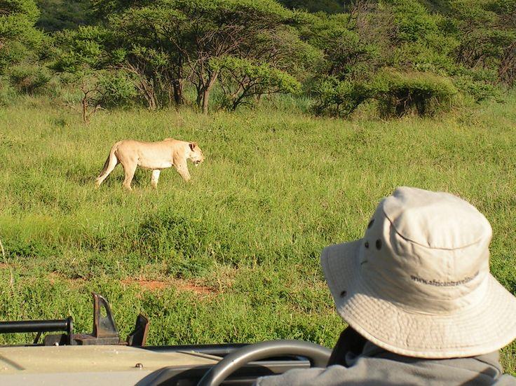 Big 5 Safari on Route 62